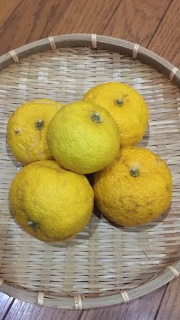 Yuzu(Citrus junos) ;winter fruit in Japan