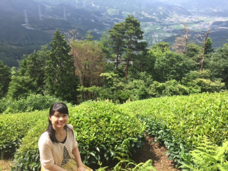 Hometown of Japanese Tea Ceremony ~Matcha Tea Field in Wazuka, Kyoto~