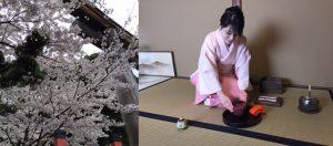 tea ceremony under cherry blossom