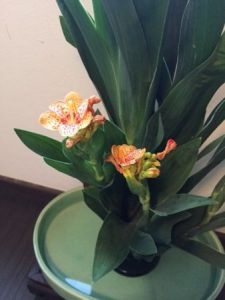 flower for Gion festival in Kyoto
