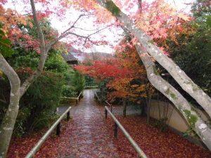 Ko-etsuji temple in Kyoto