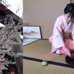 tea ceremony for cherry blossoms