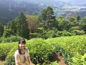 tea filed in Uji Kyoto